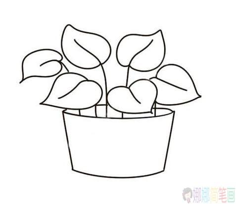 绿萝彩色植物简笔画