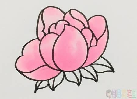 芍药花朵简笔画步骤教程