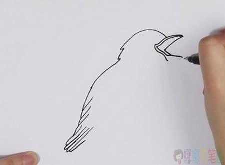 夜莺小鸟简笔画教程